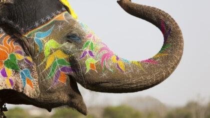 Turyści bojkotują atrakcje ze słoniami na Sri Lance po ujawnieniu drastycznych zdjęć