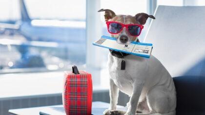 Podróżujesz z psem? Testujcie hotele przyjazne zwierzętom! Czekają vouchery o wartości 8 000 zł i i cały świat