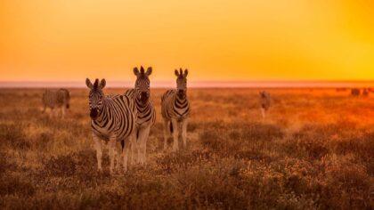 Tanie podróże do Afryki – sprawdź które kierunki nie zrujnują Twojego portfela