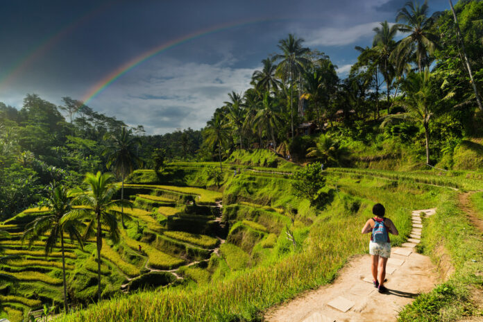 Tarasy ryżowe Tegalalang