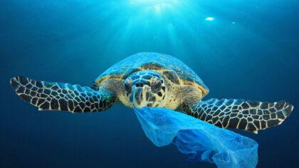 Podróżujesz po świecie? Dawaj przykład! Top 7 przedmiotów, które mogą zastąpić plastik