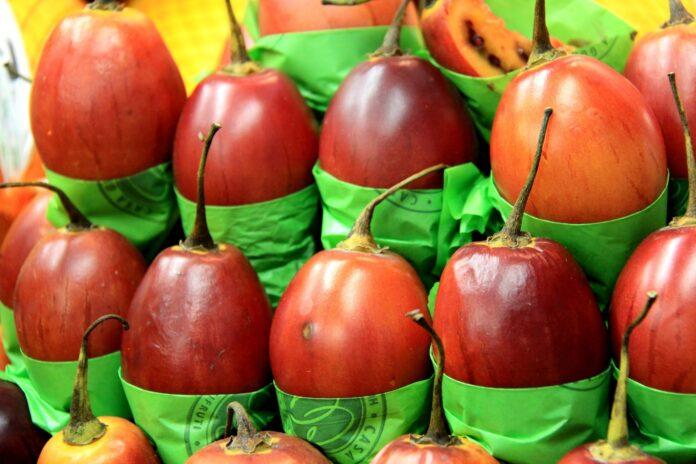 owoc tamarillo