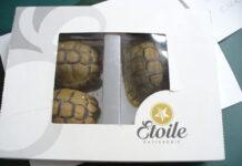 przemyt żółwi w pudełku