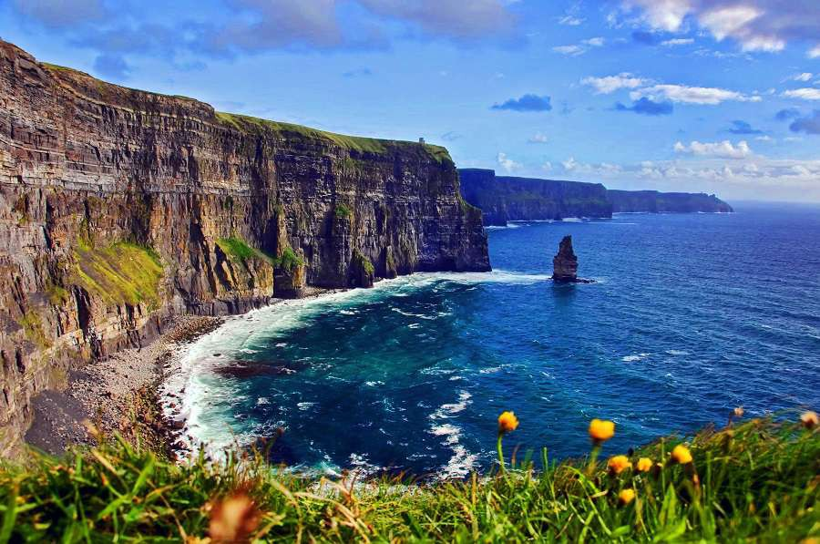 Cliffs-of-Moher-flower-shutterstock_39759274