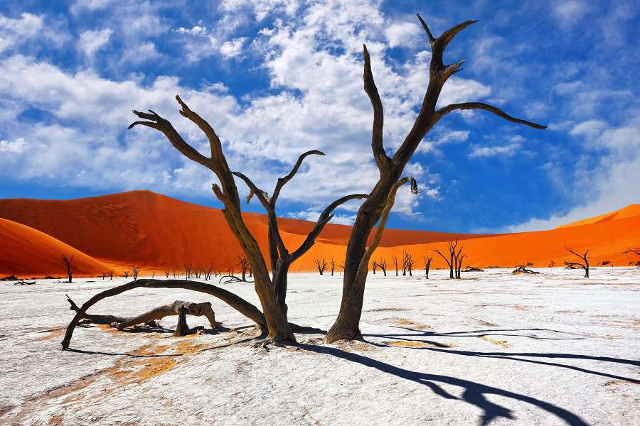 Dead-Camelthorn-Trees-against-red-dunes-and-blue-sky-in-Deadvlei-Sossusvlei.-Namib-Naukluft-National-Park-Namibia-Africa-shutterstock_437288254