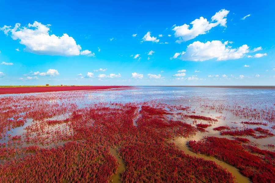 The-Red-Beach-located-in-the-Liaohe-Delta-some-30km-near-Panjin-City-Liaoning-Ch-shutterstock_619559249