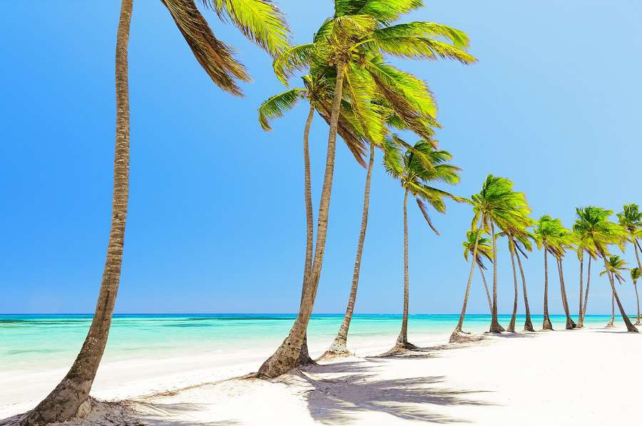 Coconut-Palm-trees-on-white-sandy-beach-in-Cap-Cana-Dominican-Republic-shutterstock_569050498