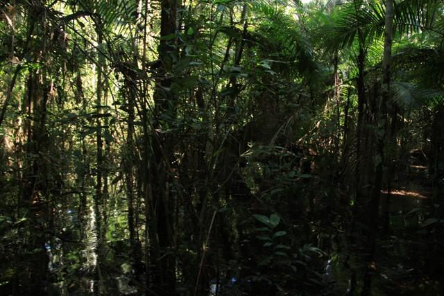 Amazońska dżungla w Peru (region Madre de Dios)