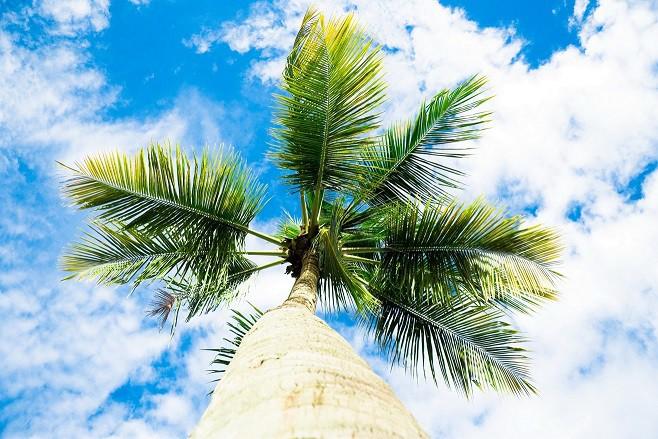 Ruszą bezpośrednie loty TUI z Katowic na Minorkę i rajską Dominikanę!