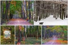 Lasek Aniołówki Częstochowa
